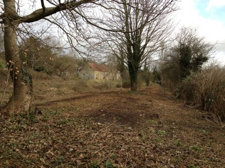 We cleared the site of bramble etc.