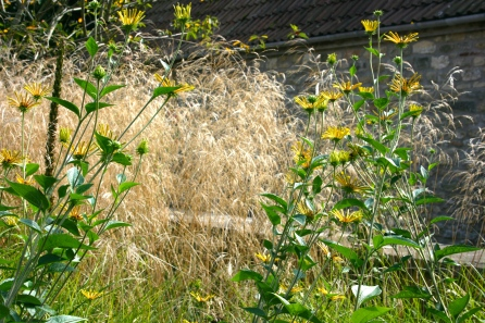 Rudbeckia and Deschampsia
